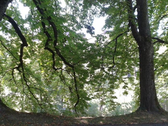 Trees of Bern
