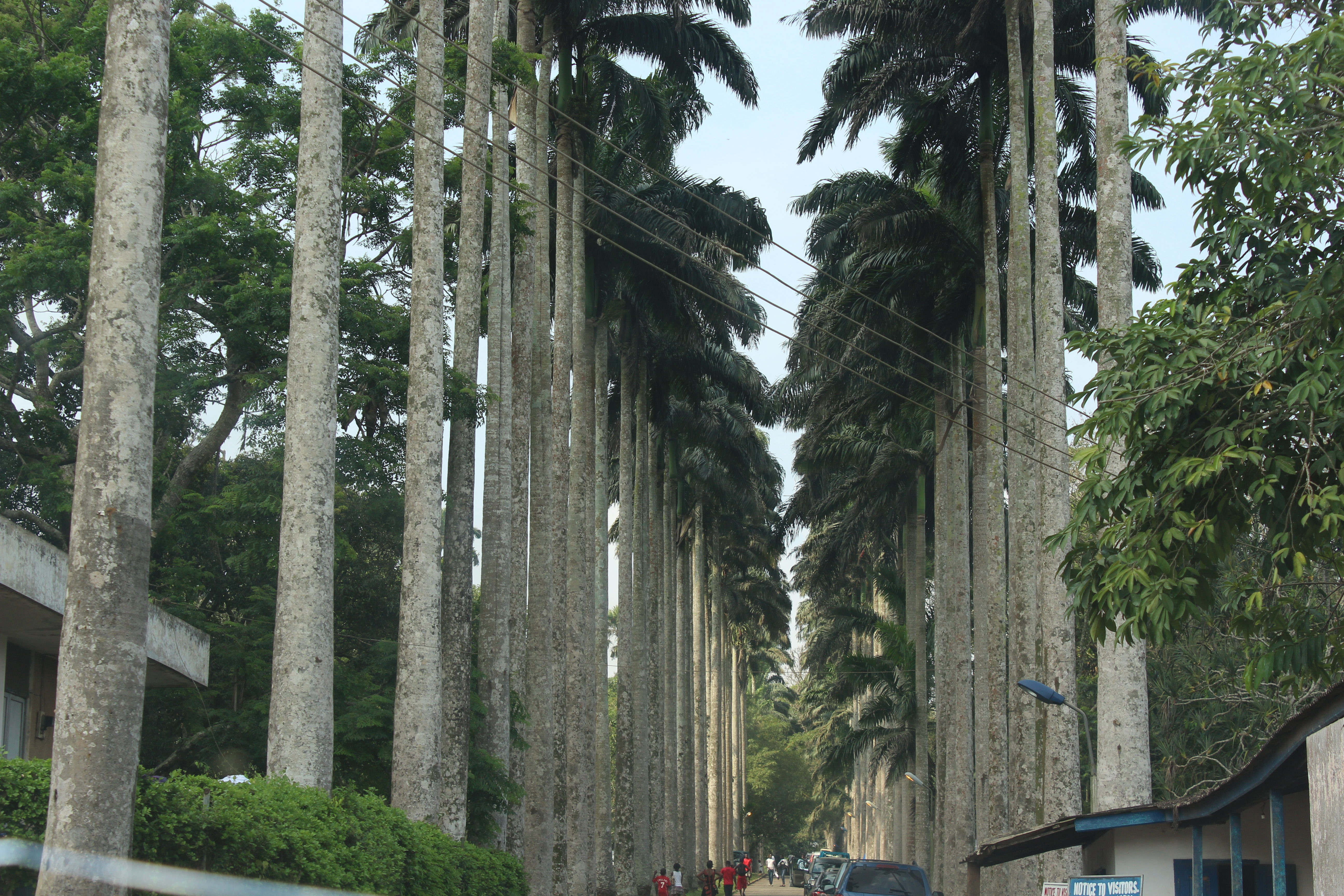 Aburi park 2