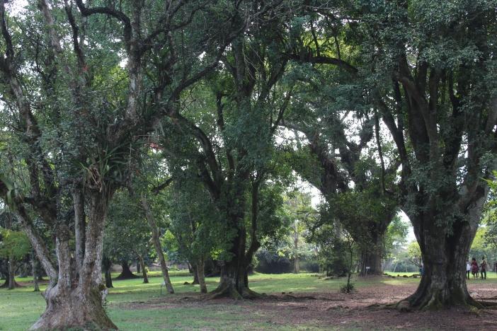 aburi park