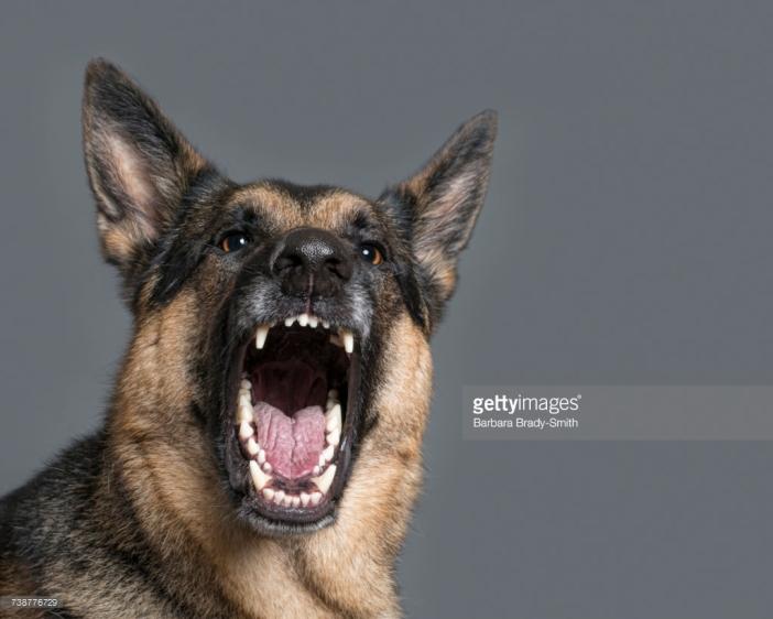 Fierce dog baring teeth