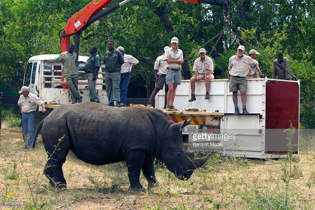 Conservationists Move 10 Rhinos By Air In Largest Relocation In History