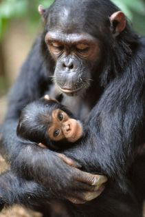 Monkey and baby 3